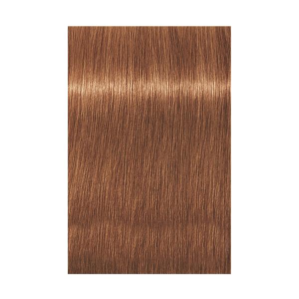 Купить Краска для волос Indola Indola, Краска для волос Indola Permanent Caring Color 8.43 светлый блонд медный золотистый 60 мл